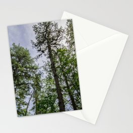 The Pine Barrens - New Jersey Stationery Cards