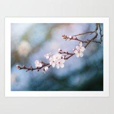 First Blossom Art Print
