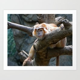 Monkey Relaxing Art Print