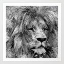 Lion Black and White  Mixed Media Digital Art by nataskk