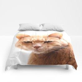 Red cat watching Comforters