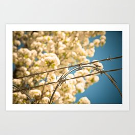 Wires and blossoms Art Print