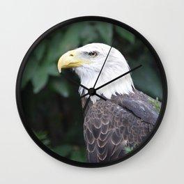 National Aviary - Pittsburgh - Bald Eagle 4 Wall Clock