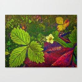 Wild Strawberry Plant Canvas Print