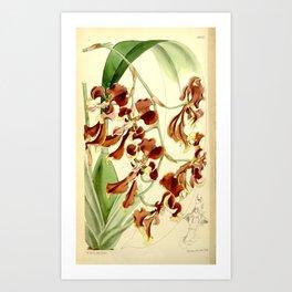 Cyrtochilum serratum Art Print
