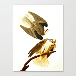Black Winged Hawk Illustration Canvas Print