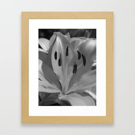 Asiatic Lily (mono) Framed Art Print