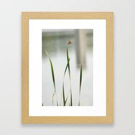 dragonfly3 Framed Art Print