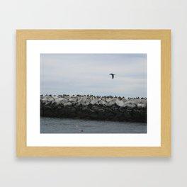 Cormorants in Provincetown Harbor Framed Art Print