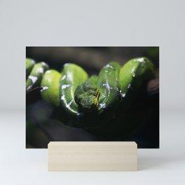 Green Snake Mini Art Print