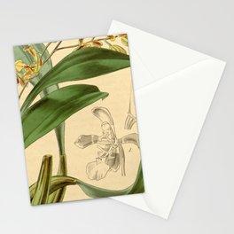 Oncidium cruciatum (as Oncidium pubes var. flavescens) Curtis' 68 (N.S. 15) pl. 3926 (1842) Stationery Cards