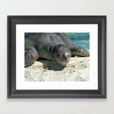 Turtle Ashore Framed Art Print