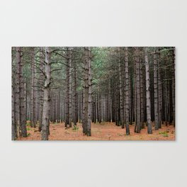 Northwoods Canvas Print