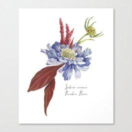 Blue Scabiosa Flower Canvas Print