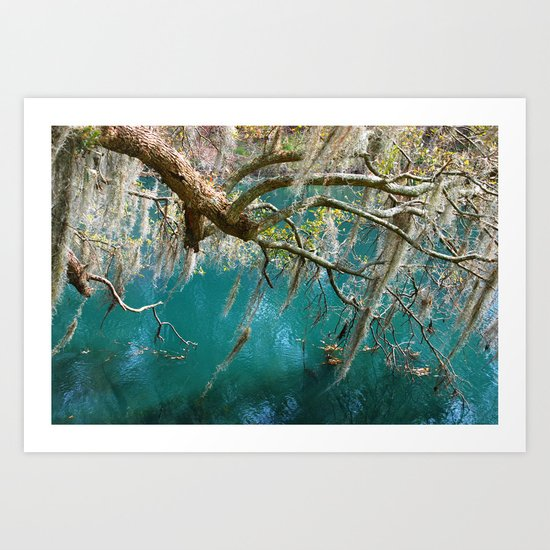 Moss hanging down from the tree Art Print