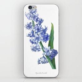 HIGHEST QUALITY botanical poster of Hyacinth iPhone Skin