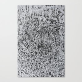 Hare in the Grass Canvas Print