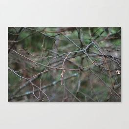 Tangling Branches Canvas Print