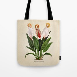 Anthurium scherzerianum old plate Tote Bag