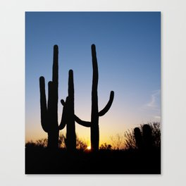 Carol M Highsmith - Saguaro Cactus near Tucson, Arizona 3 Canvas Print