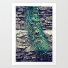 Peacock  Art Print