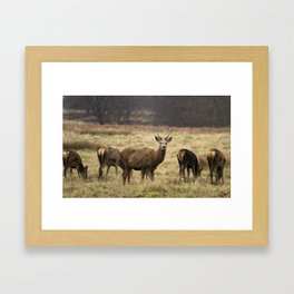 Looking at you! Framed Art Print
