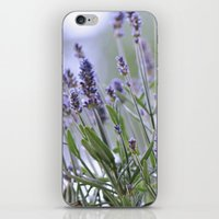 lavender iPhone & iPod Skins featuring lavender by Artemio Studio
