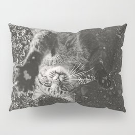 Cat Paws and Plays Pillow Sham