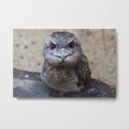 Papuan Frogmouth Metal Print