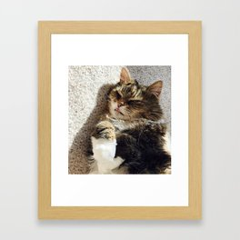 Silly cat Framed Art Print