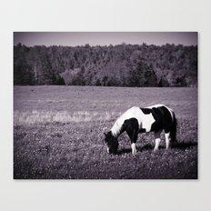 Animal :: Roadside Horse Canvas Print