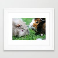 pigs Framed Art Prints featuring guinea pigs by Christine baessler