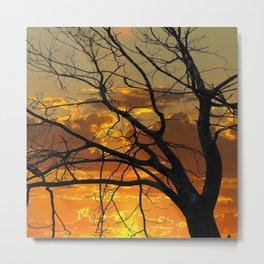 Sunset Tree, California Metal Print