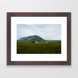 Icelandic Horses Posing for a Photo Framed Art Print