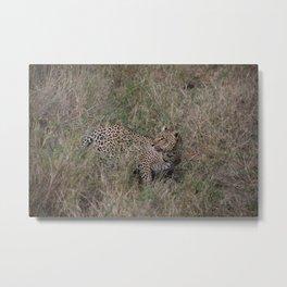 Serengeti Leopard I Metal Print