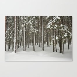 Snowfall in the taiga forest Canvas Print