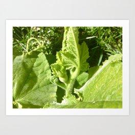 Butternut squash plant Art Print