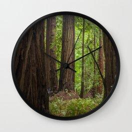 Muir Woods Trees Wall Clock