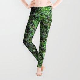 Moss Leggings