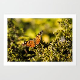Flutter Member Art Print