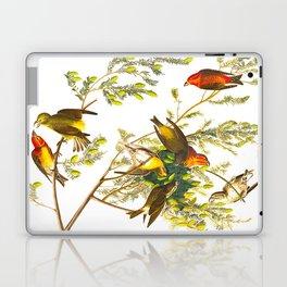 American Crossbill Vintage Bird Illustration Laptop & iPad Skin