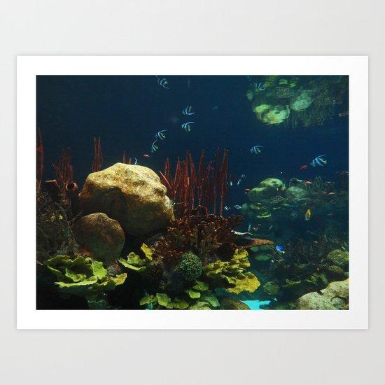 In  the Aquarium Art Print
