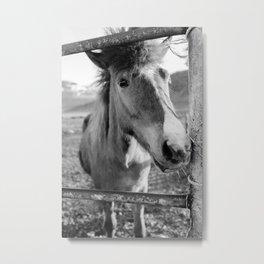 Berg Horse Farm Metal Print