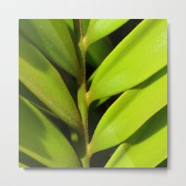 Vegetable balance - Green design Metal Print