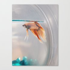 Fish in a fishbowl Canvas Print