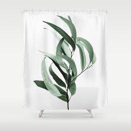 Eucalyptus - Australian gum tree Shower Curtain