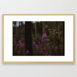 Purple North Framed Art Print