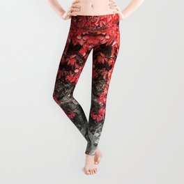 Pink red ivy leaves autumn stone wall Leggings