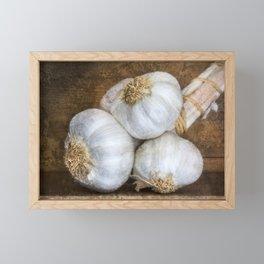 Garlic Bulbs Framed Mini Art Print