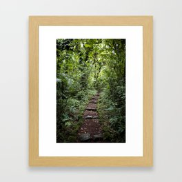 Steps Leading through the Lush Rainforest of Mombacho Volcano, Nicaragua Framed Art Print